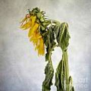 Textured Sunflower Art Print by Bernard Jaubert