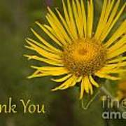 Thank You Yellow Aster Art Print