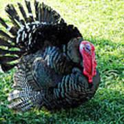Thanksgiving Turkey Dinner Art Print