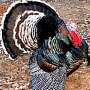 Thanksgiving Turkey Jitters Art Print