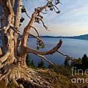 The Banks Of Crater Lake Art Print