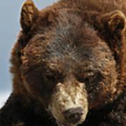 The Bear 2 Art Print