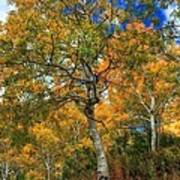 The Colors Of The Aspen Forest Art Print
