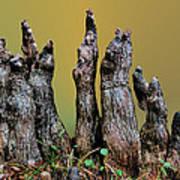 The Cypress Knees Chorus Art Print