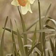 The Daffodil In Partial Sepia Art Print