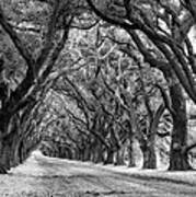 The Deep South Monochrome Art Print