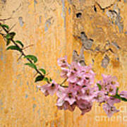 The Escaping Bougainvillea Art Print