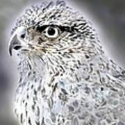 The Eye Of An Eagle  Art Print by Yvonne Scott