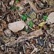 The Fallen Butterfly Wings Art Print