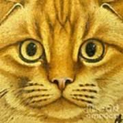 The French Orange Cat Art Print