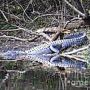 The Gator That Lives Under The Bridge Art Print