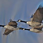 The Geese Art Print
