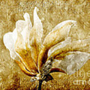 The Golden Magnolia Art Print by Andee Design