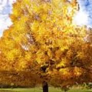 The Golden Tree Art Print