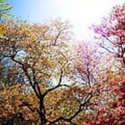The Grandest Of Dreams - Cherry Blossoms - Brooklyn Botanic Garden Art Print
