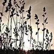 The Grass At Sunset Art Print