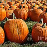 The Great Pumpkin Patch Art Print