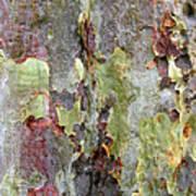 The Green Bark Of A Tree Art Print