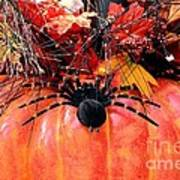 The Harvest Spider Art Print