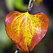The Heart Of Autumn Art Print