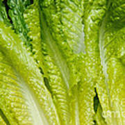 The Heart Of Romaine Art Print