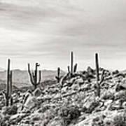 The High Desert  Art Print
