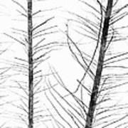 The Hirsute Trees Art Print