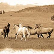 The Horse Herd Art Print