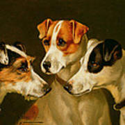 The Hounds Art Print by Alfred Wheeler