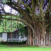 The House Beside The Banyan Tree Art Print