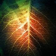 The Intense Leaf Art Print