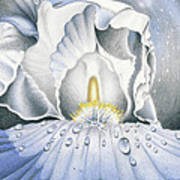 The Iris Universe Art Print by Elizabeth Dobbs