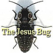 The Jesus Bug Art Print