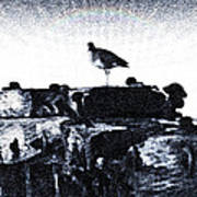 The Jetty Bird Art Print