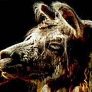 The Legendary Llama  Art Print