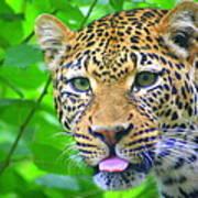 The Leopard's Tongue Art Print