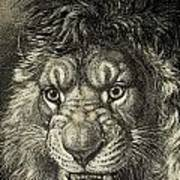 The Lion, King Of Beasts.  From El Art Print