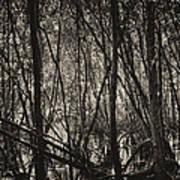The Mangrove Art Print