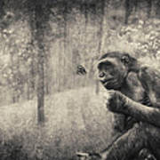 The Monkey And Butterfly Art Print