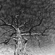 The Moon Tree Art Print by Artist Orange