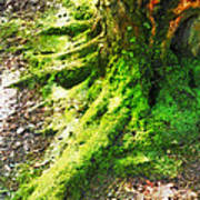 The Moss Covered Roots Art Print