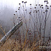 The Old Fence - Blue Misty Morning Art Print