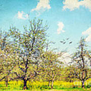 The Orchard Art Print by Darren Fisher