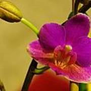 The Original Orchid Art Print