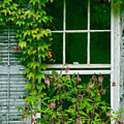 The Other Window Art Print by Lisa  DiFruscio