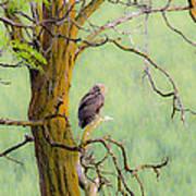 The Owls Overlook Art Print