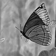 The Papillion Art Print