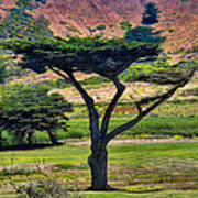 The Peace Tree Art Print