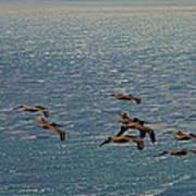 The Pelicans Hunting Art Print