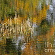 The Pond Shallows Art Print